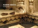 Крысиный храм Karni Mata, просмотр видео.