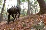 Большой собака. Прикольное видео